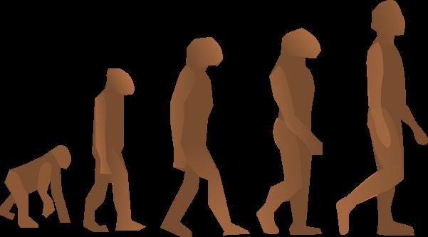 evolution-24560